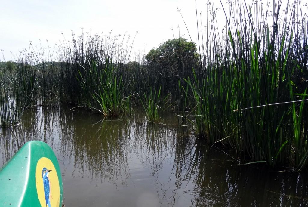 Descente de la Semois en canoë