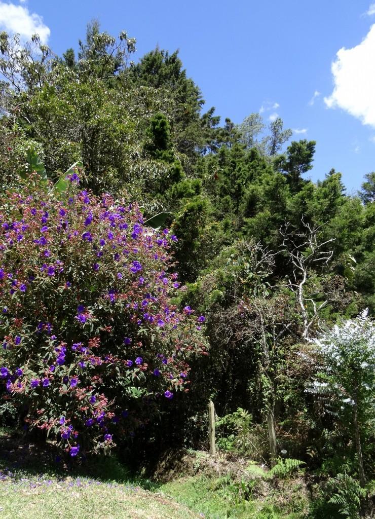 Arbre en fleur Parque Arvi Medellin Antioquia Colombie