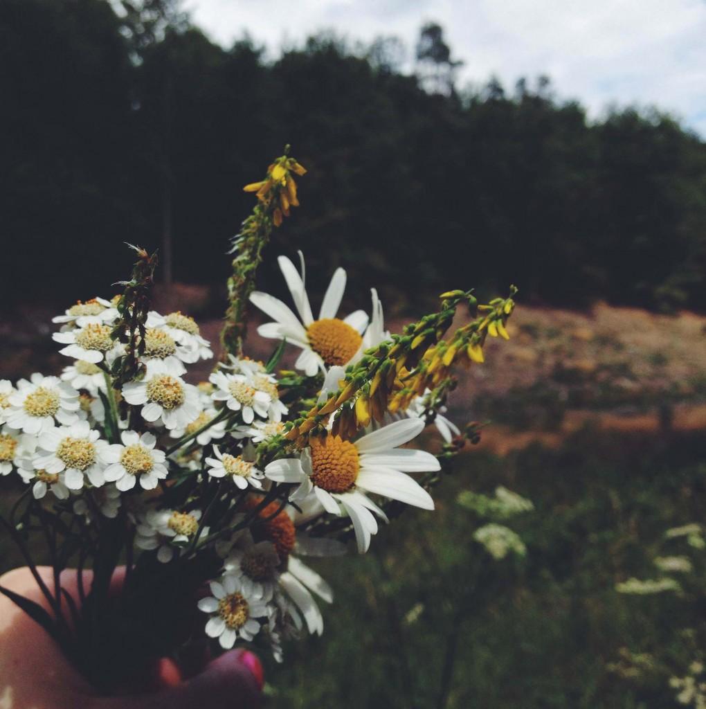 Bouquet de fleur sombres