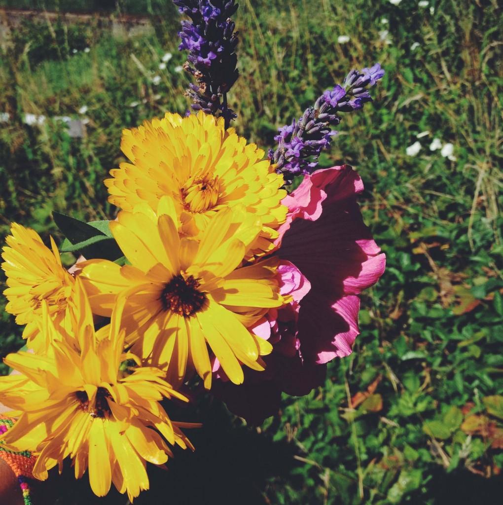Bouquet de fleurs vives et colorées