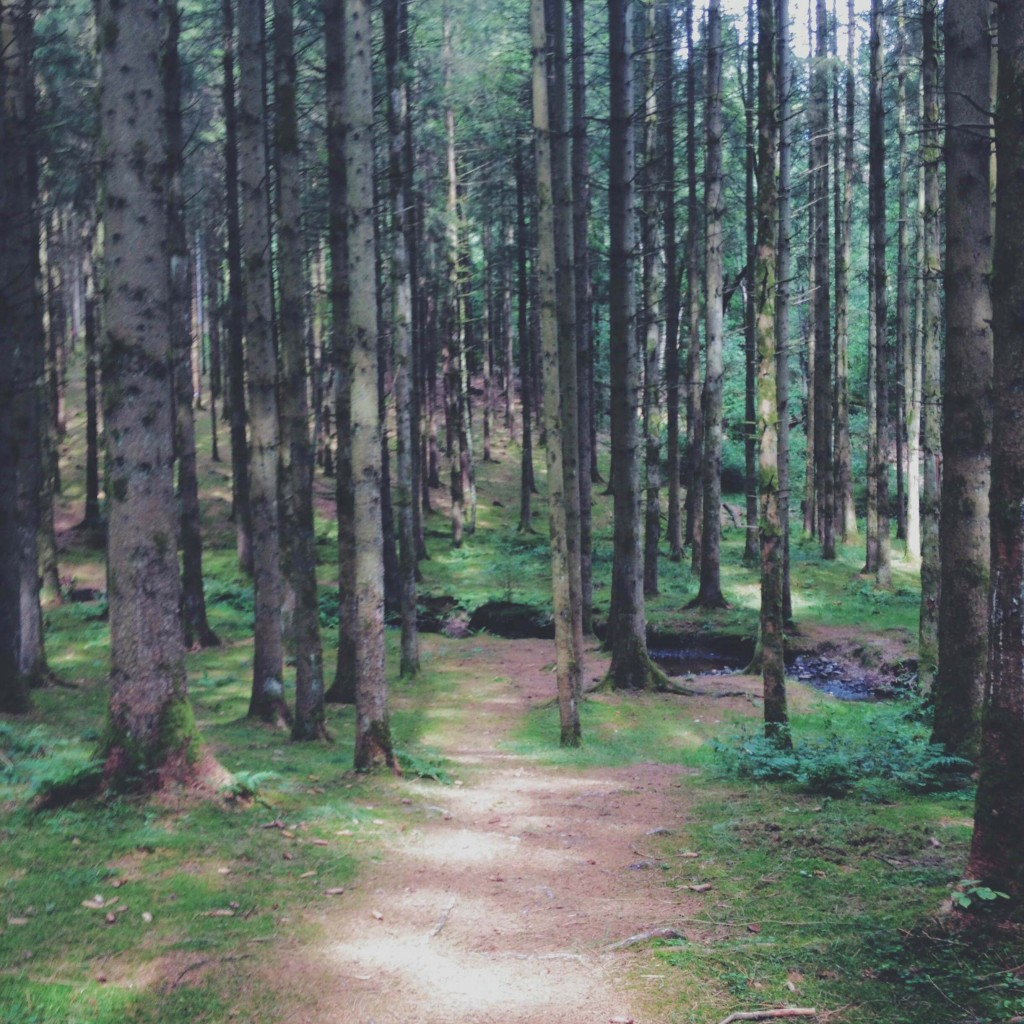 Balade en forêt d'Ardenne Belge