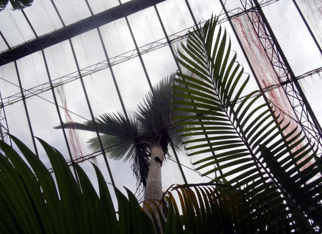 Jardin Botanique Bogota - Colombie - Cookie et Attila 12