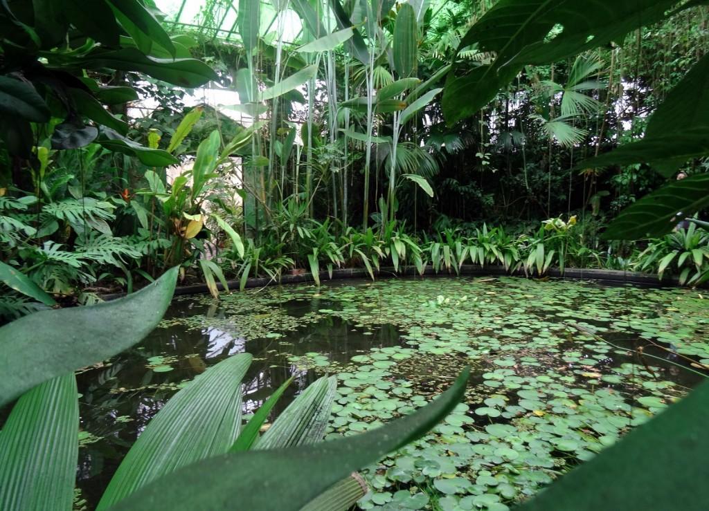 Jardin Botanique Bogota - Colombie - Cookie et Attila 14