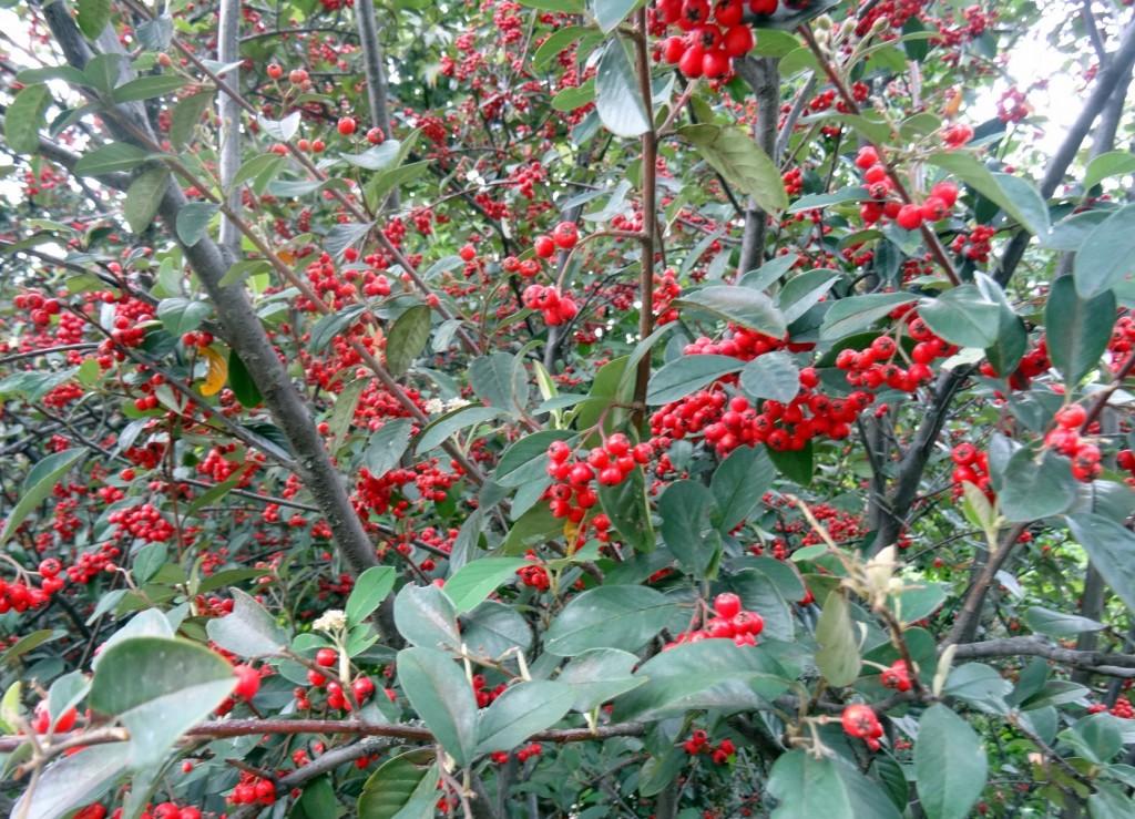 Jardin Botanique Bogota - Colombie - Cookie et Attila 23
