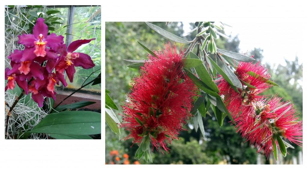 Jardin Botanique Bogota - Colombie - Cookie et Attila 26