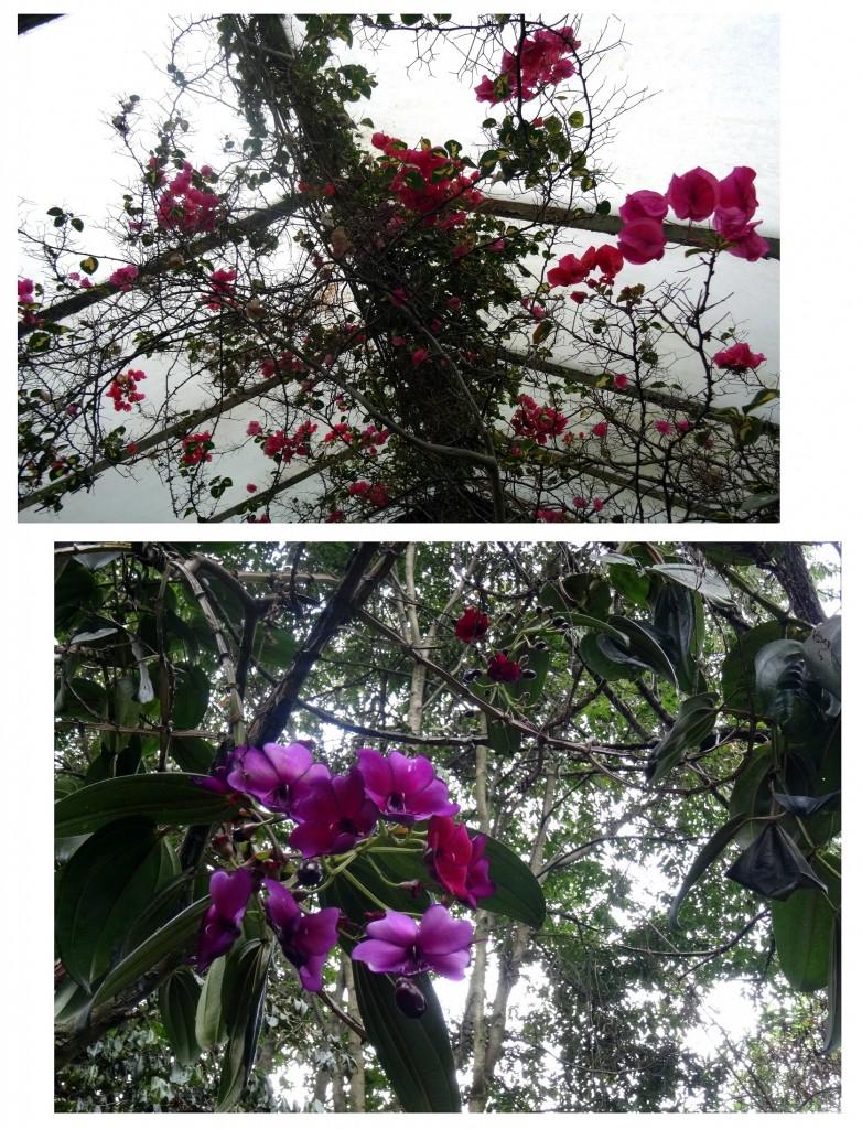 Jardin Botanique Bogota - Colombie - Cookie et Attila 27