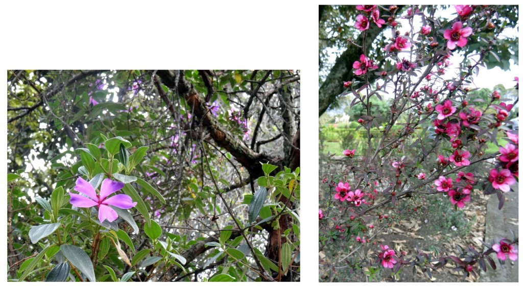 Jardin Botanique Bogota - Colombie - Cookie et Attila 28