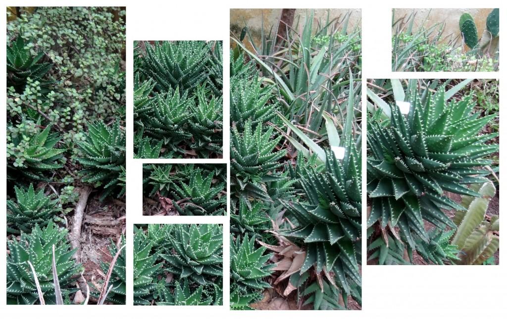 Jardin Botanique Bogota - Colombie - Cookie et Attila 29