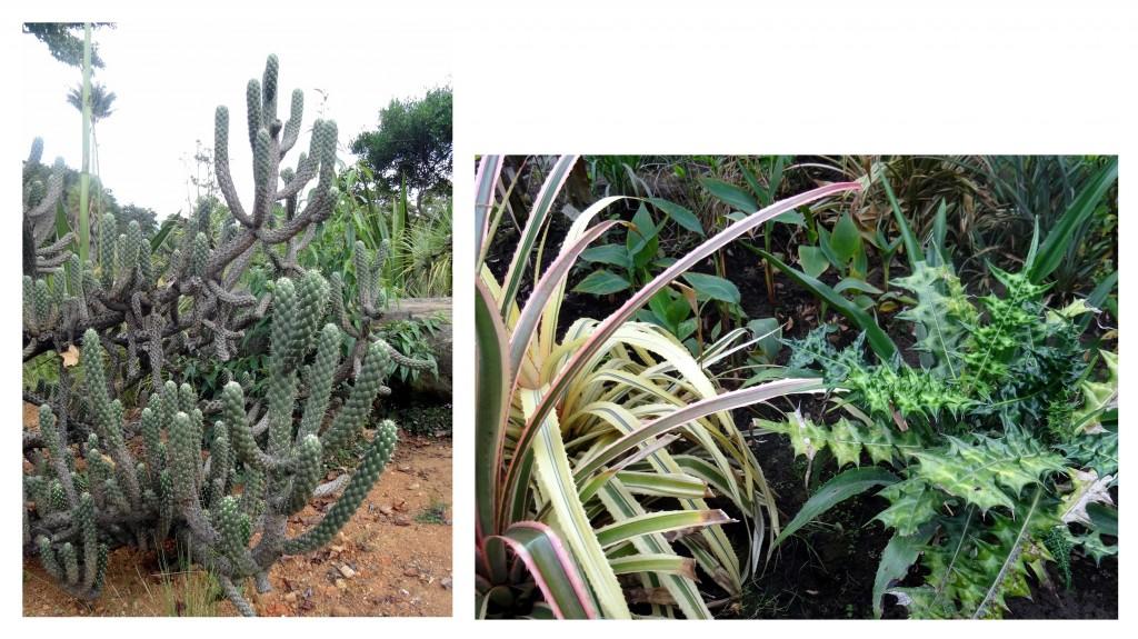 Jardin Botanique Bogota - Colombie - Cookie et Attila 30