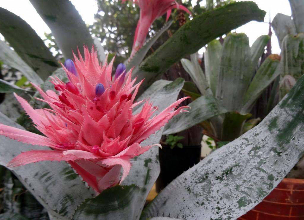 Jardin Botanique Bogota - Colombie - Cookie et Attila 4