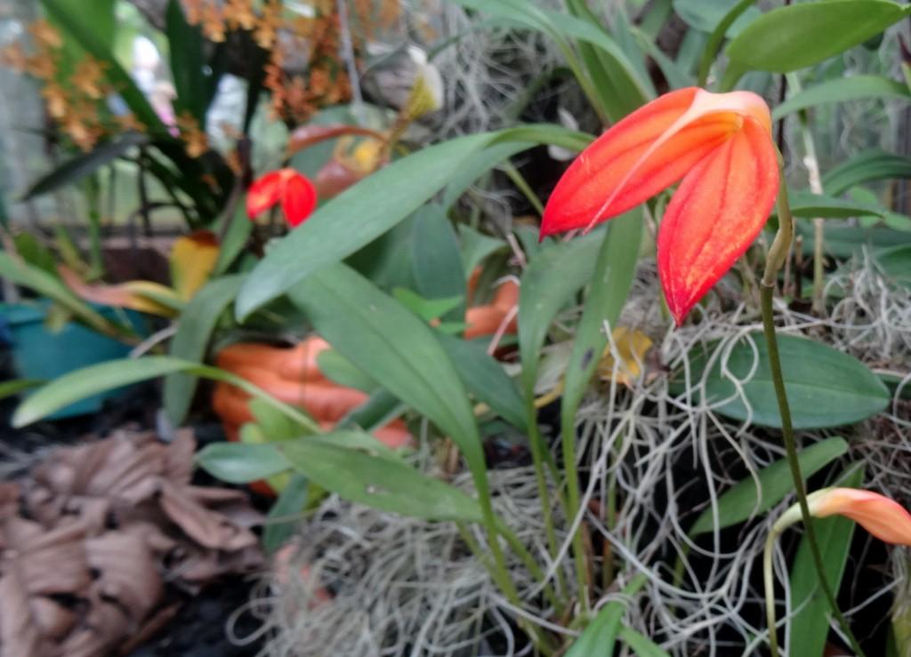 Jardin Botanique Bogota - Colombie - Cookie et Attila 6