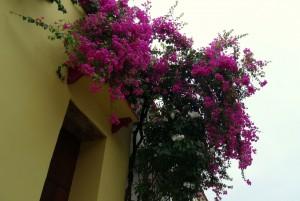 Carthagène des Indes, ville fleurie