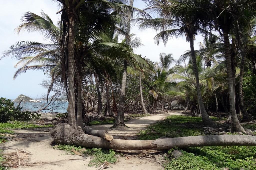 Forêt tropicale à Cabo San Juan Tayrona en Colombie