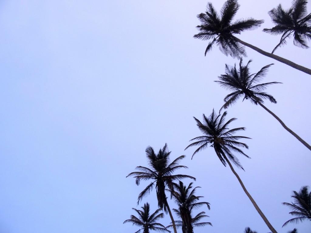 Palmiers à Cabo San Juan Tayrona en Colombie