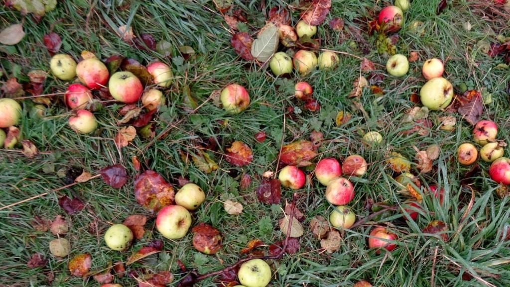 Sol couvert de pommes