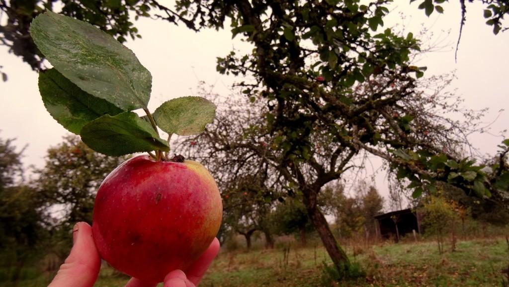 Jolie pomme bio rouge