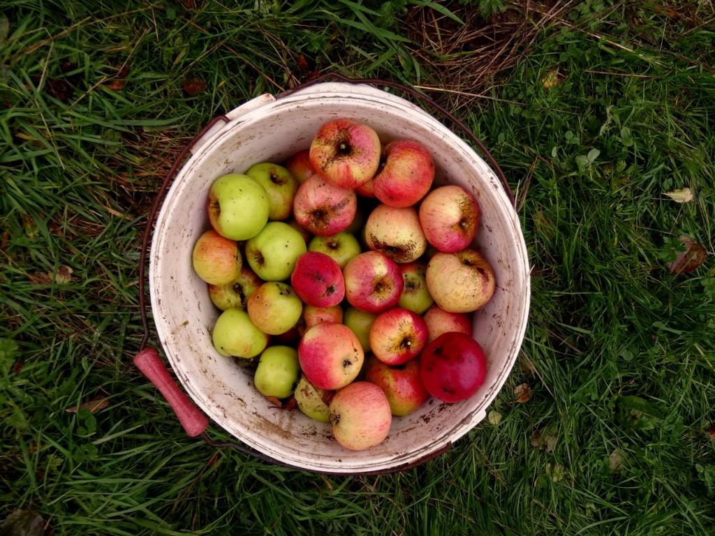 Seau de jolies pommes bios colorées
