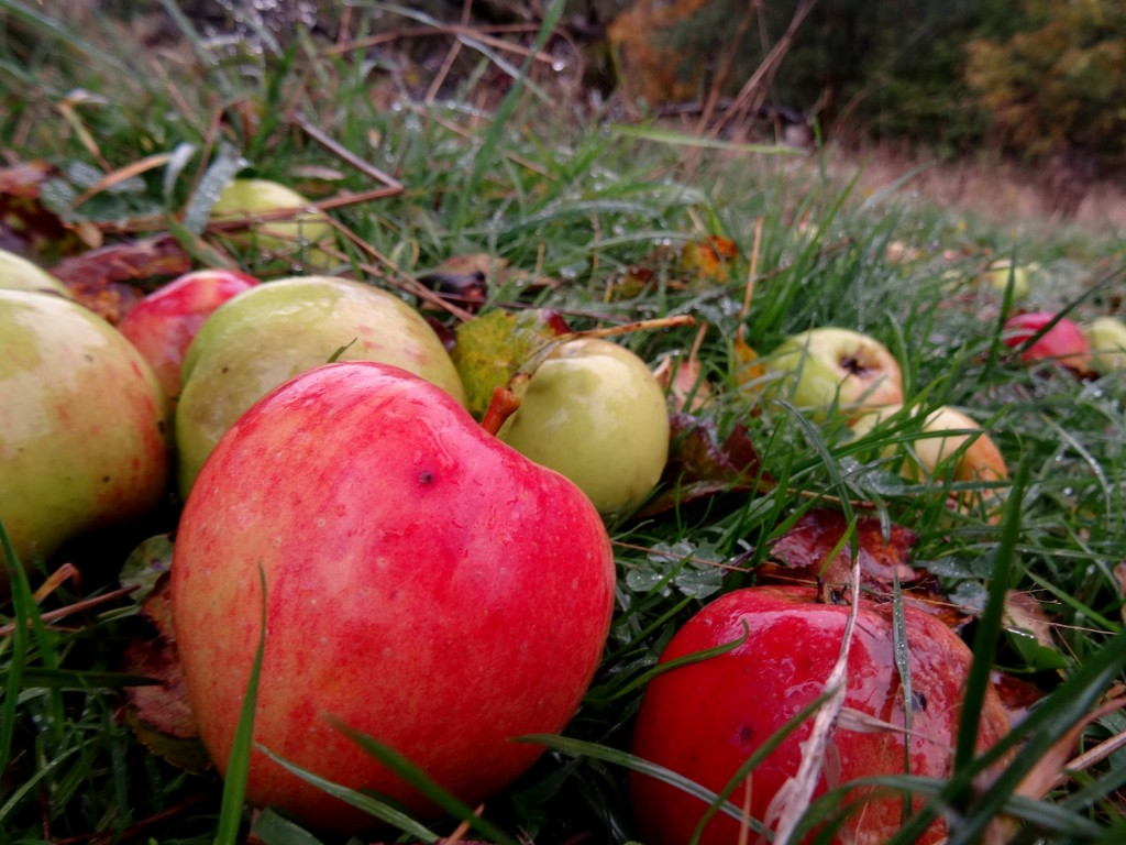 Pomme bio de Belgique