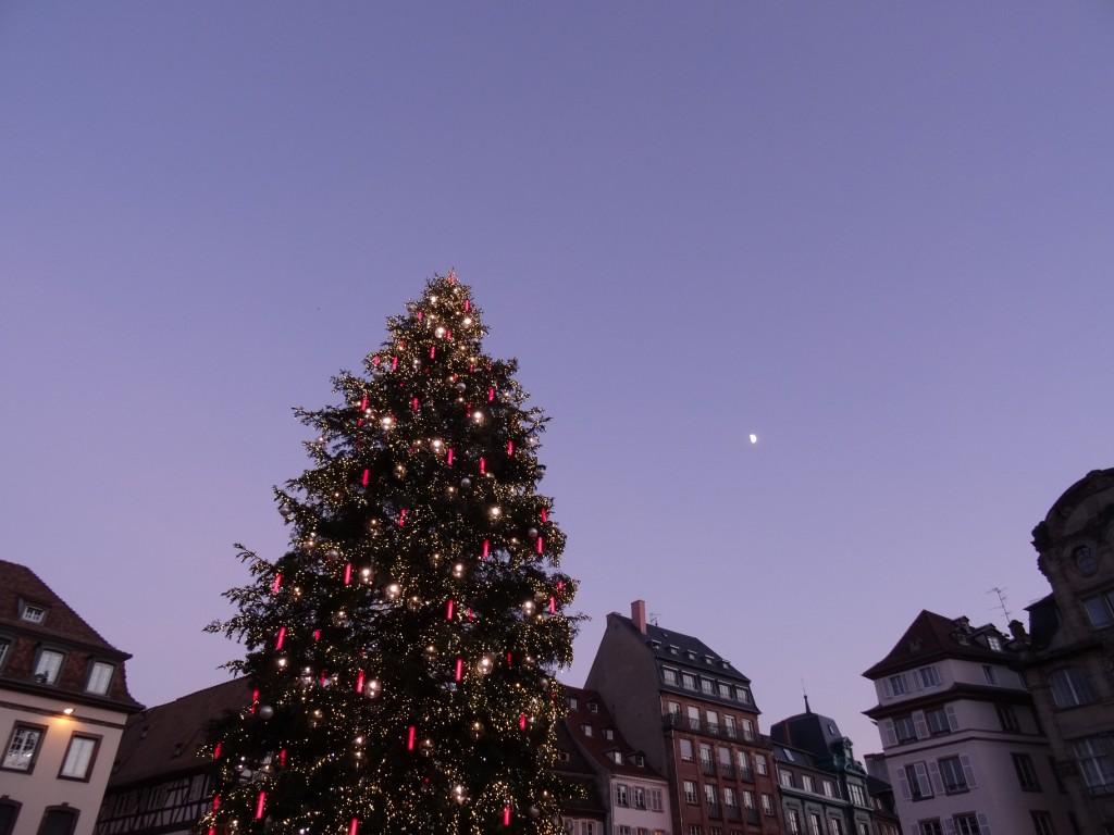 Sapin des Vosges pour le marché de Noël à Strasbourg