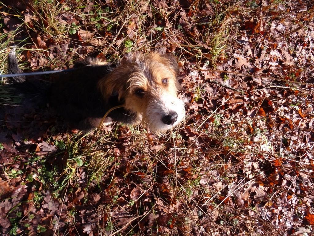Promenons nous dans les bois - CookieetAttila 21
