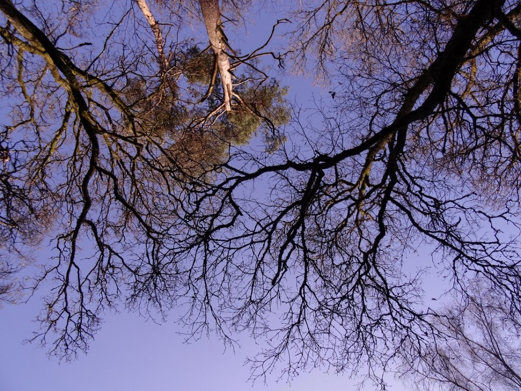 Promenons nous dans les bois - CookieetAttila 24b