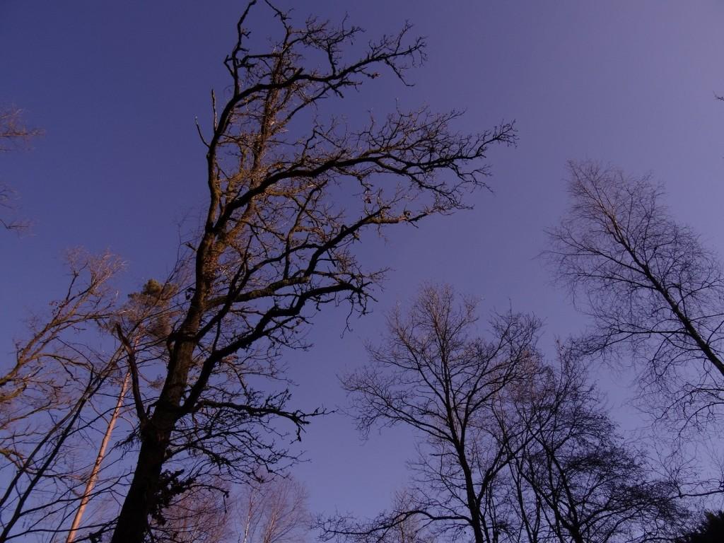 Promenons nous dans les bois - CookieetAttila 25b