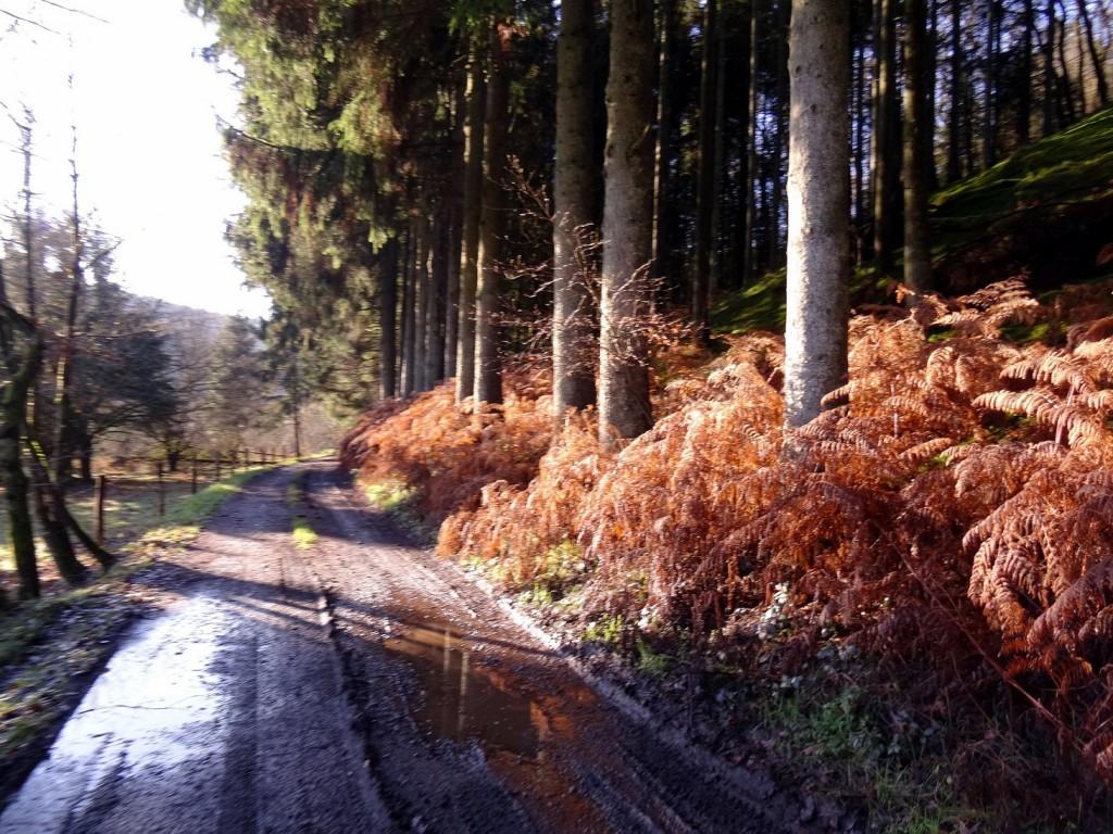 Chemin boueux d'automne dans une forêt belge