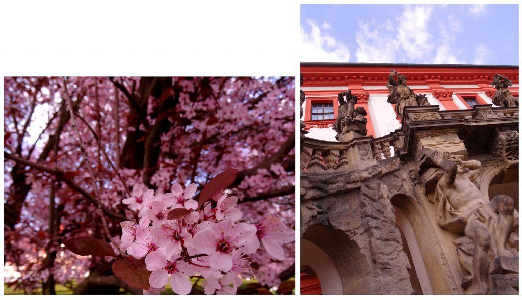 Arbres en fleur au château Troja à Prague, République Tchèque