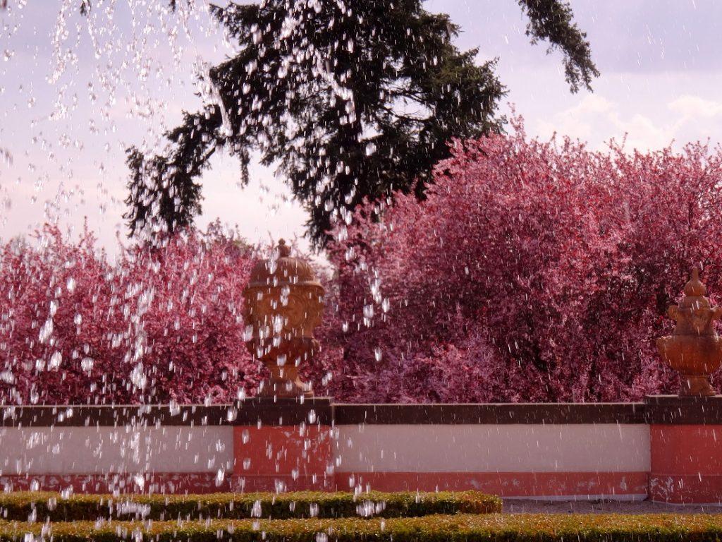 Fleurs roses et fontaine au château de Troja à Prague