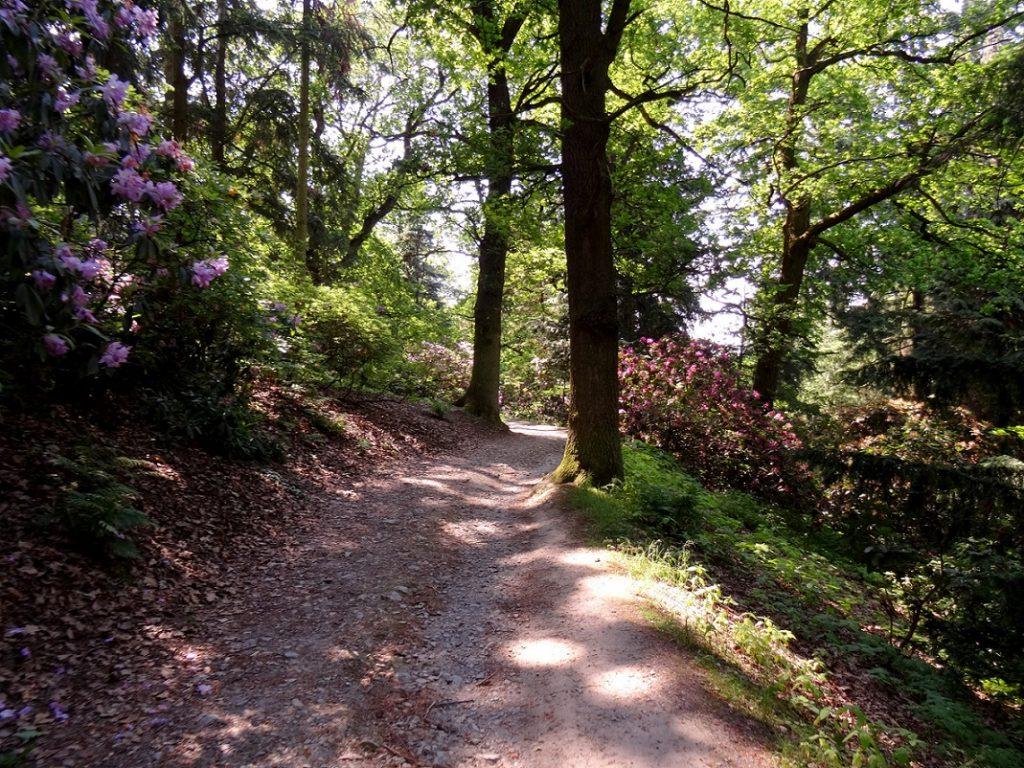 Randonnée entre les rhododendrons