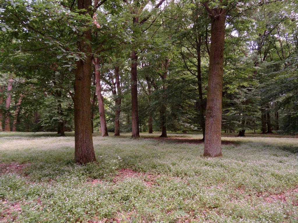 Forêt et fleurs qui jonchent le sol