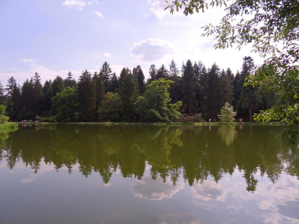 Reflet de la forêt environnante dans l'étang de Pruhonice