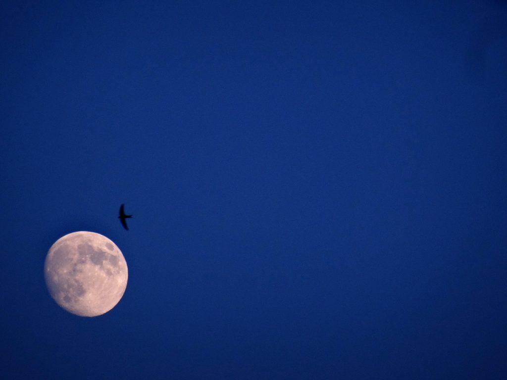 La lune et l'oiseau