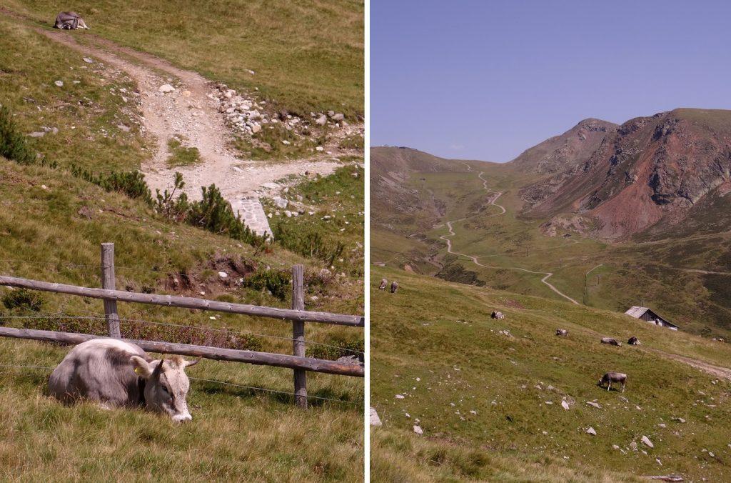 Vache et sentiers du Tyrol du Sud
