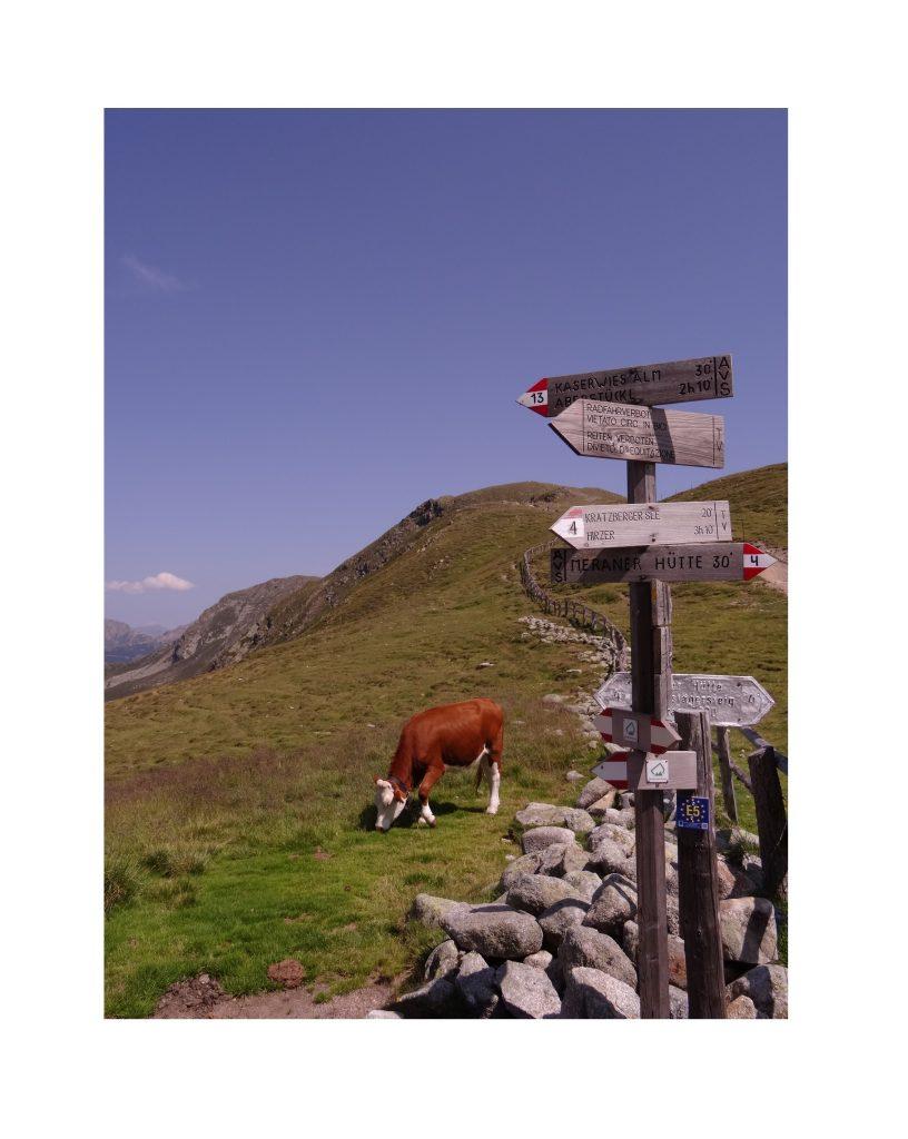 Vache et sentiers du Tyrol du Sud vers la Kratzberger See