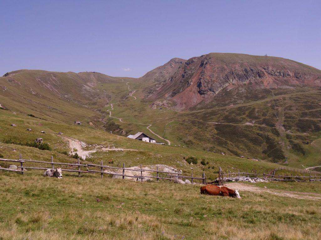 Une vache et des sentiers dans les montagnes des Alpes italiennes