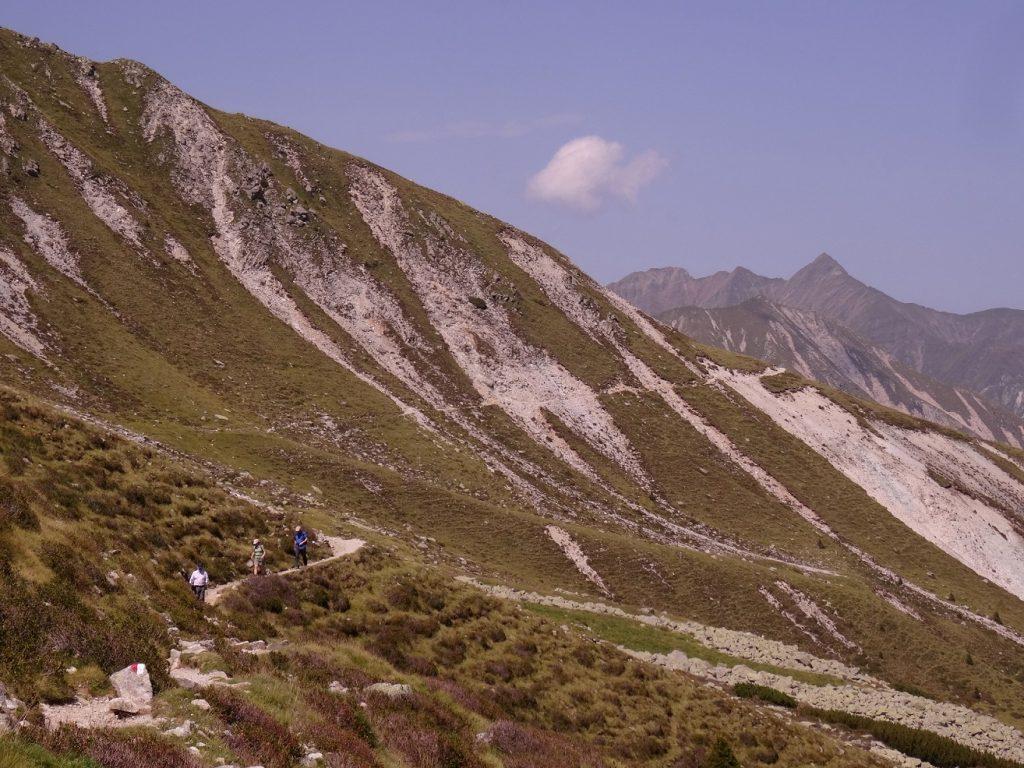 Verdure et montagne dans le Tyrol du Sud