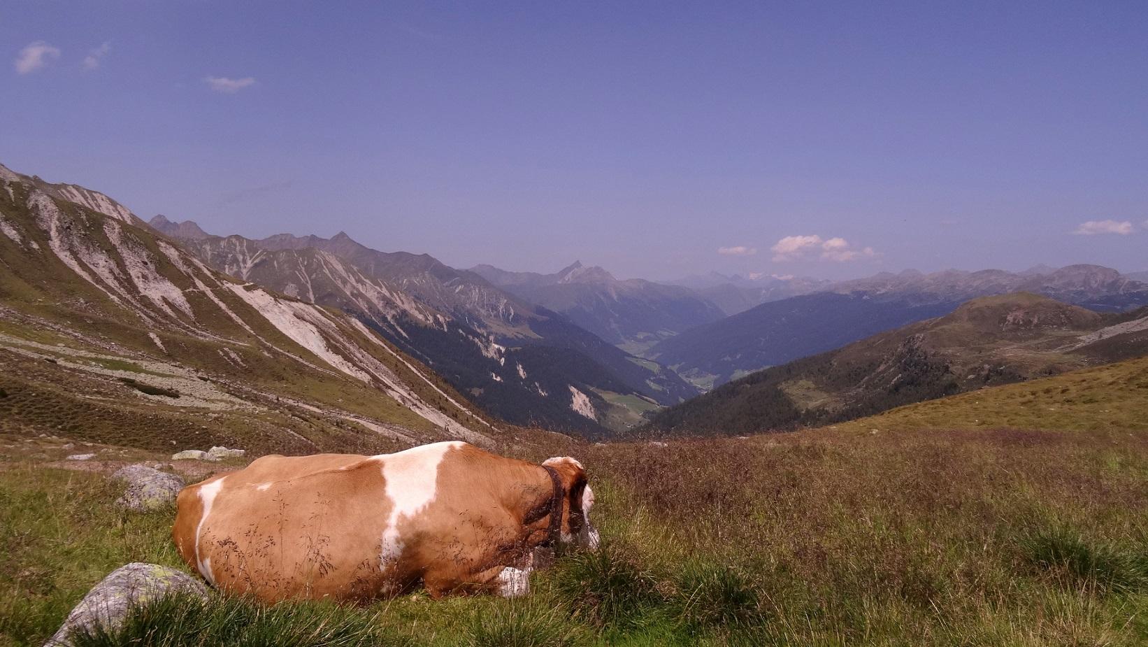 Randonnée dans le Tyrol du Sud : de Falzeben à la Kratzberger See