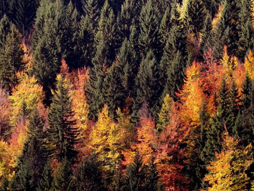 La forêt de Spindleruv Mlyn
