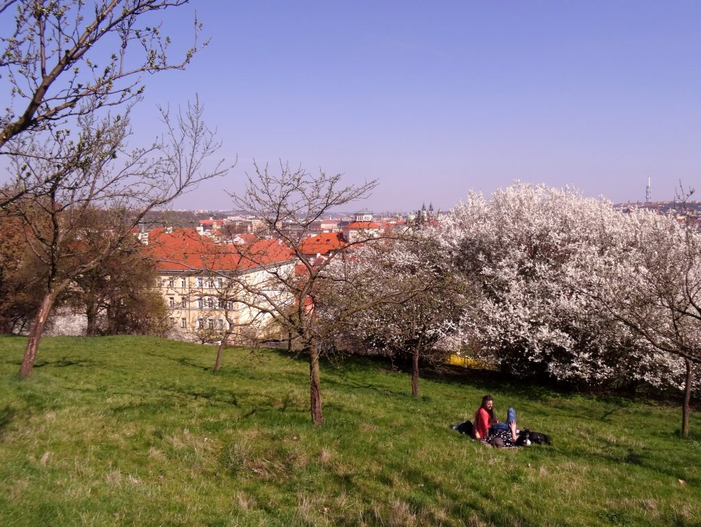 Les vergers de la colline de Petrin