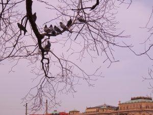 Les pigeons se reposent à Prague