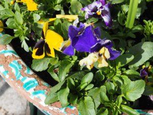 Fleurs et céramiques de Gmunden