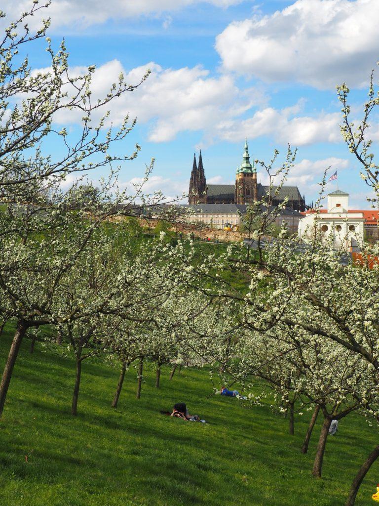 Vue sur le château de Prague depuis Petřín