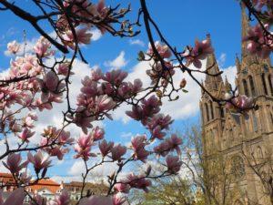 Le printemps à Namesti Miru , Prague