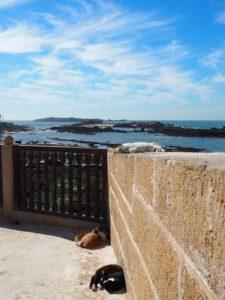 Chats dormant sur les remparts d'Essaouira