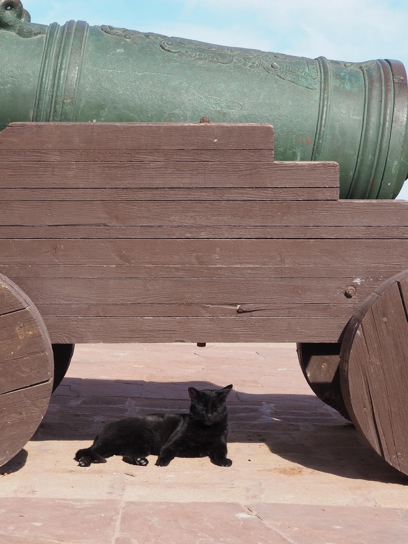 Chat dans les remparts d'Essaouira