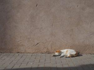 Un des nombreux chats d'Essaouira