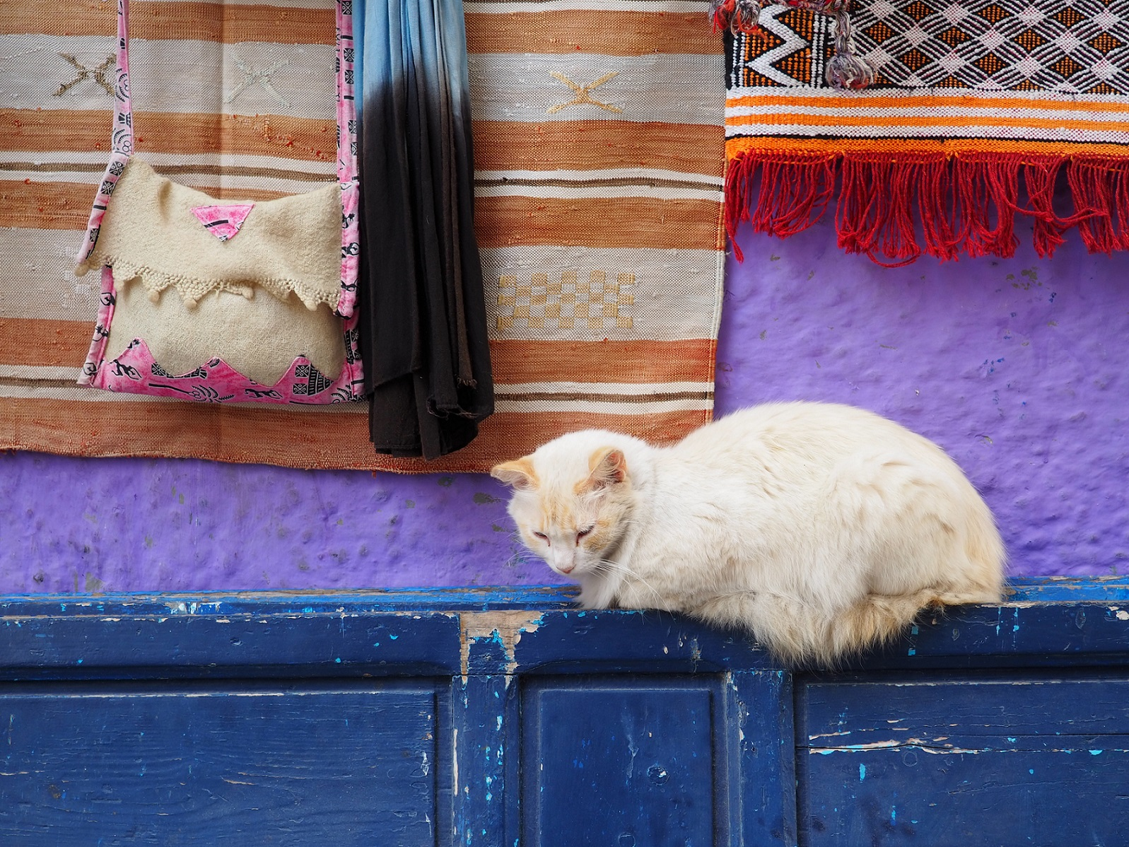 Chat d'Essaouira au Maroc