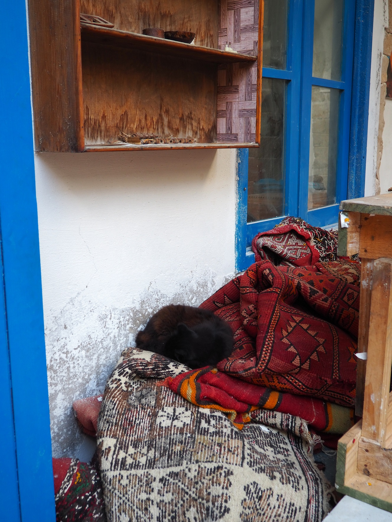 Chat dans une coopérative à Essaouira