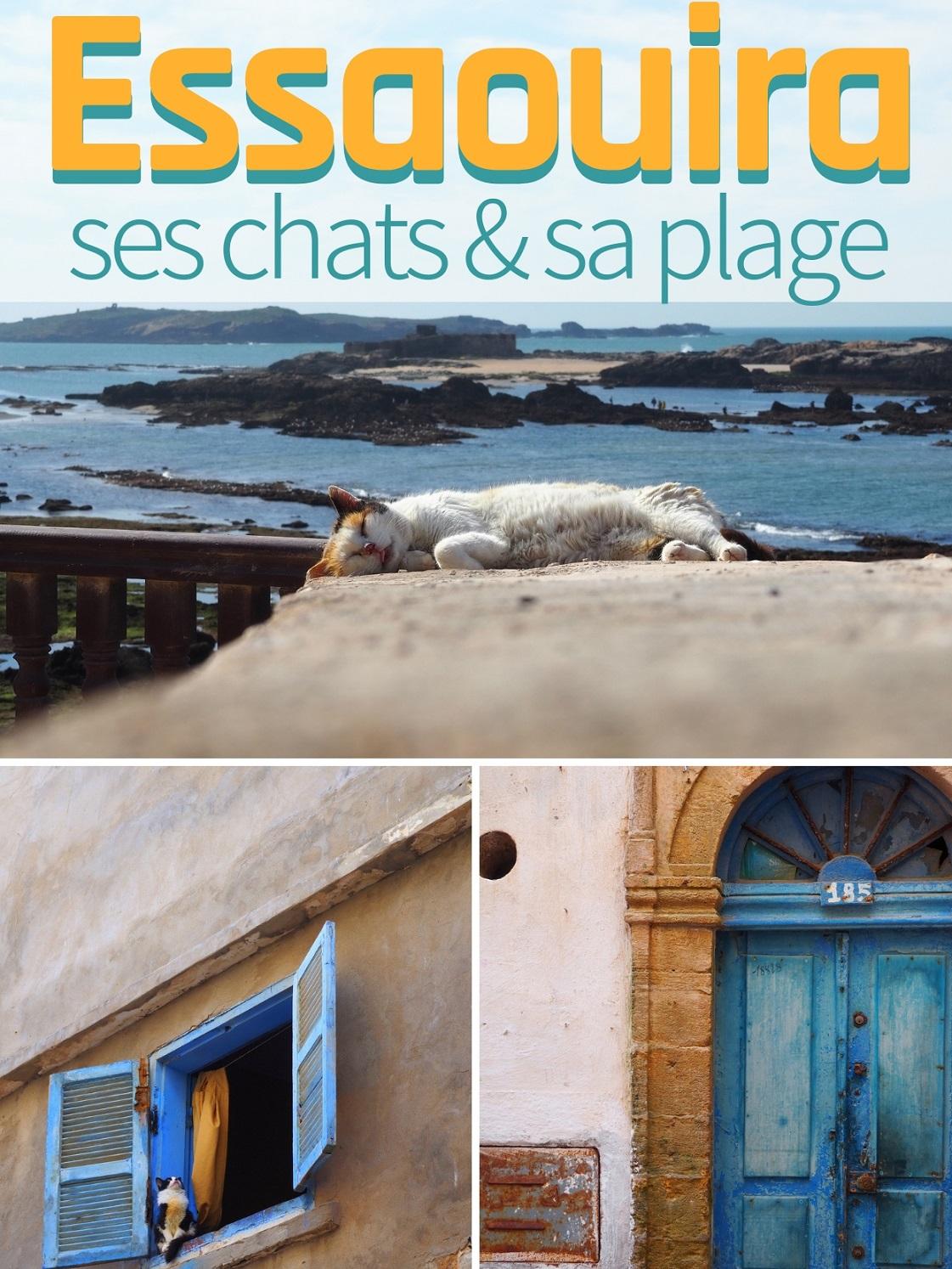 Escapade d'une journée à la rencontre d'Essaouira, de ses chats et de sa plage (au Maroc) - Cats of Essaouira, Morocco